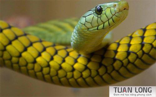 18-eighteen-Green-And-Yellow-Snake