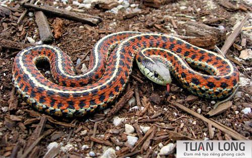 20-twenty-Garter-Snake