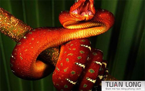 22-twentytwo-Orange-Snake
