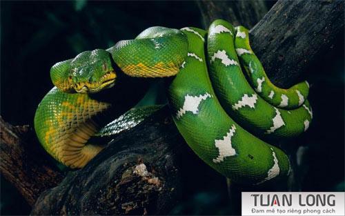 26-twentysix-snake-wallpaper