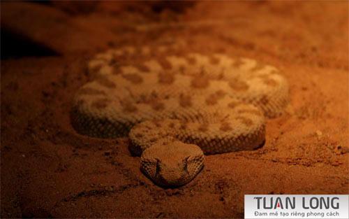 28-twentyeight-Evil-Snake