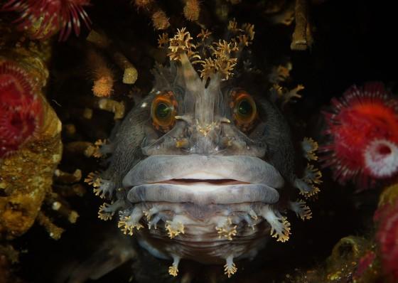 cuoc-thi-anh-quoc-te-underwater-poto-2015 (1)