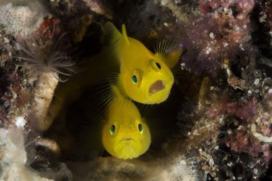 cuoc-thi-anh-quoc-te-underwater-poto-2015 (3)