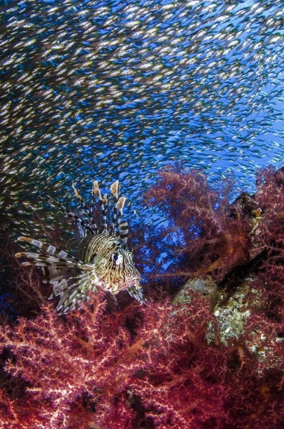 cuoc-thi-anh-quoc-te-underwater-poto-2015 (7)