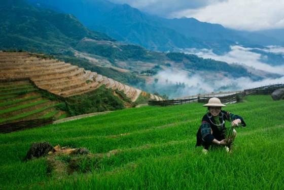 phien-cho-vung-cao-voi-nguoi-hmong-den-tu-sapa-tai-metropole (1)