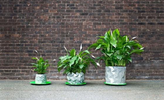 growth-chau-cay-origami-tu-lon-doc-dao (1)