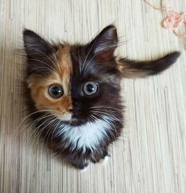 """Những bức ảnh em mèo """"hai mặt"""" đốn tim cả cộng đồng Instagram"""