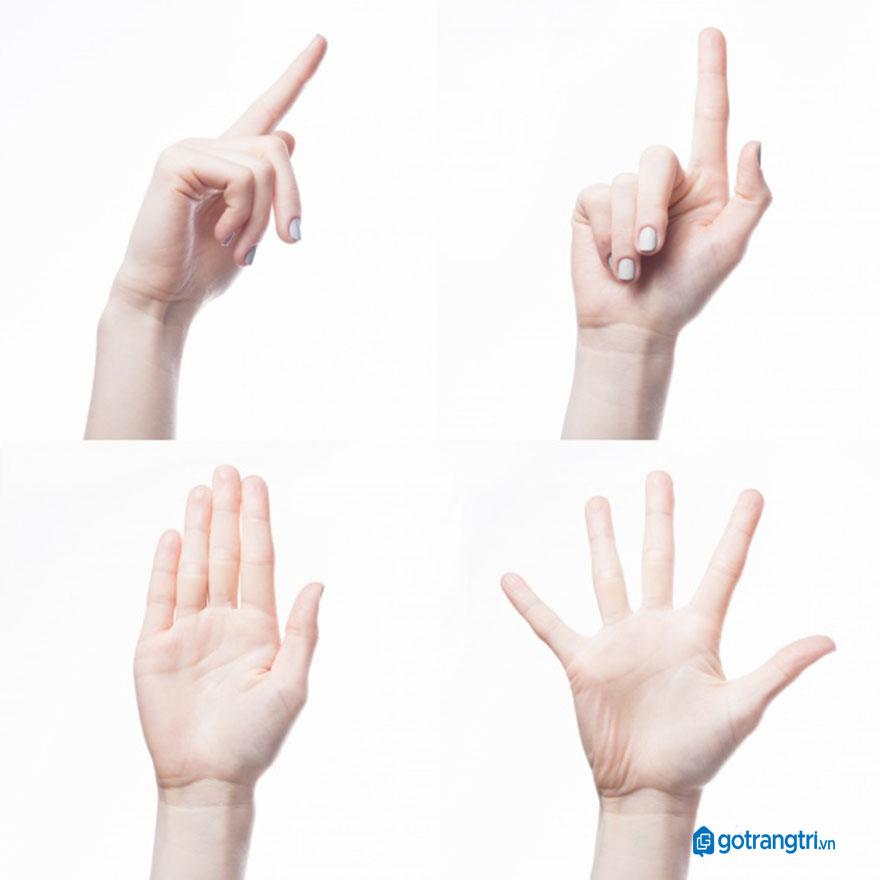 Mẫu bàn tay vector 24