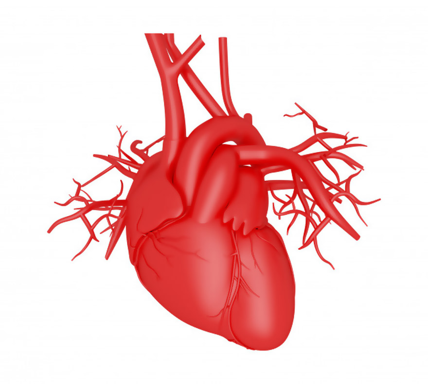 Vector trái tim miễn phí 15
