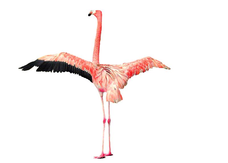 Chim hạc vector 38