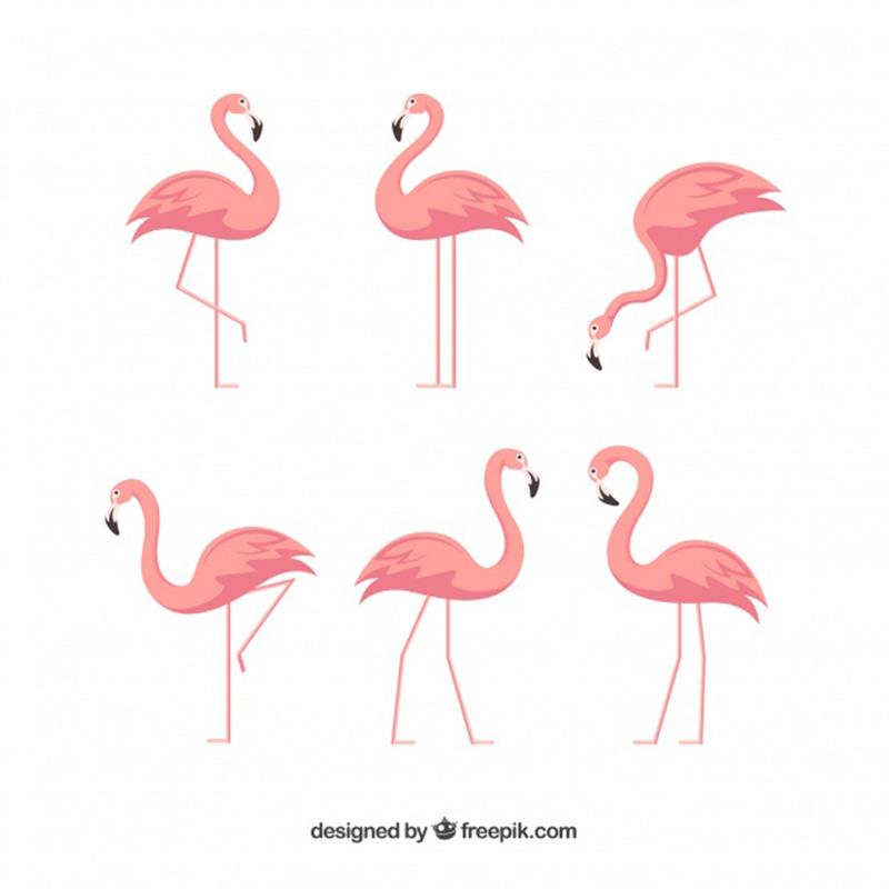 Chim hạc vector 8