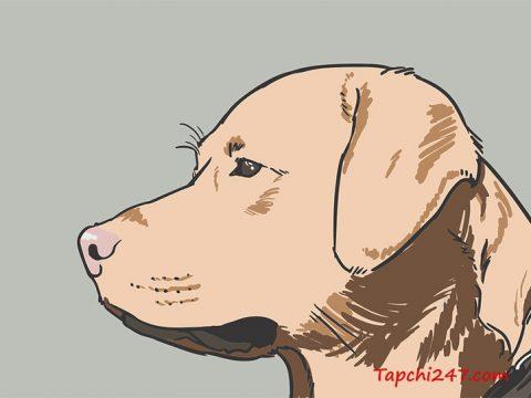 con chó vector 1