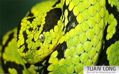 1-one-snake-wallpaper
