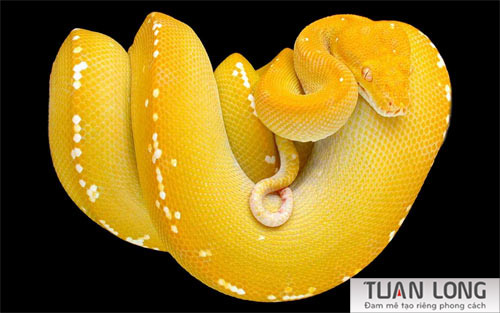 14-fourteen-The-Rattle-Snake