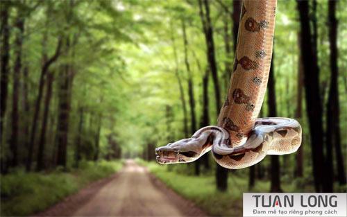 15-fifteen-snake-wallpaper