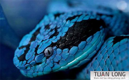 17-seventeen-Ozark-Copperhead-Snake