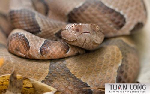 19-nineteen-Garter-Snake