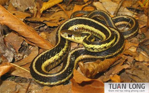 21-twentyone-Snake-wallpaper