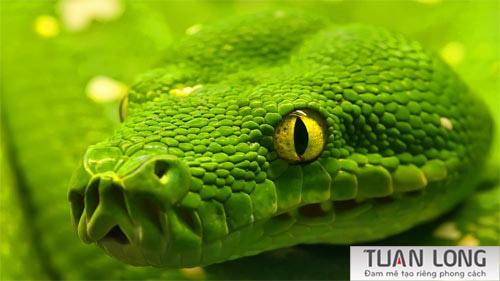 6-six-Snake-wallpaper