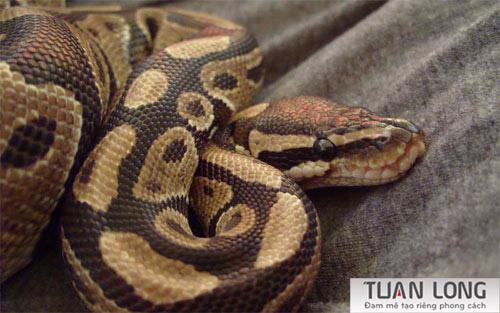 10-ten-snake-wallpaper