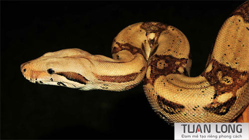 11-eleven-European-Grass-Snake