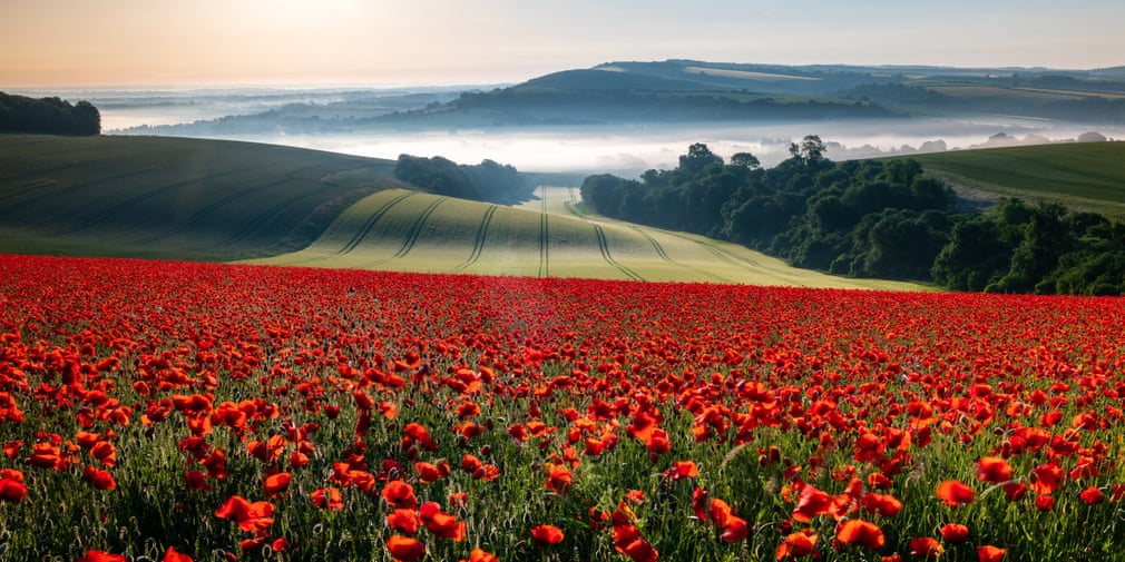 Field of red and a beautiful morning, Houghton, West Sussex,